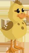 Baby Duck - Duckling