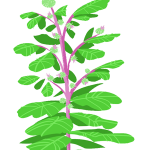 burdock-bush