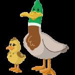 ducks-252x300